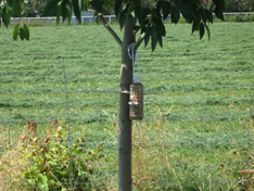 bird-feeder-tree-farblog-109.jpg