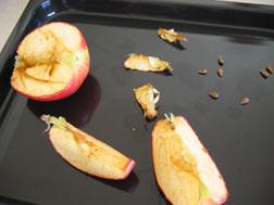 apple-science-one.jpg