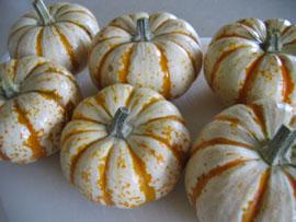 pumpkin-front-six.jpg