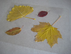 contact-paper-leaf-rubbings-060.jpg