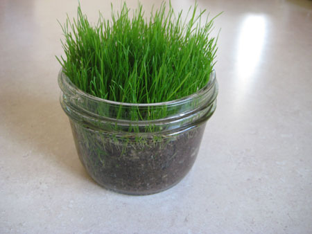 glass-jar-grass-march-054.jpg