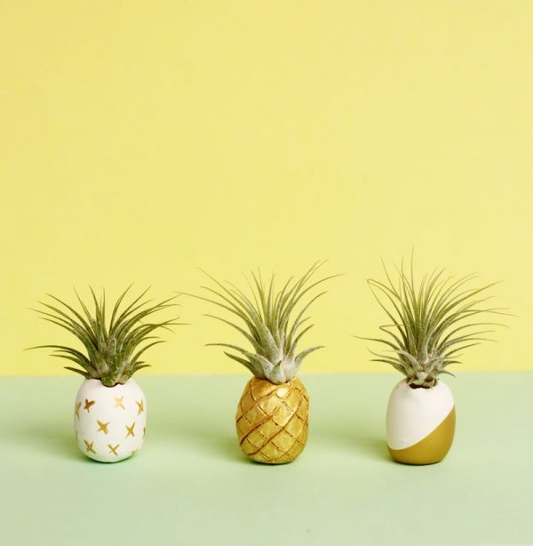 DIY Clay Air Plant Holders