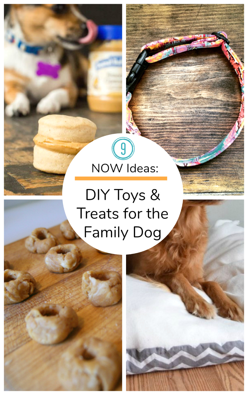 9 Now Ideas DIY Toys and Treats for the family dog