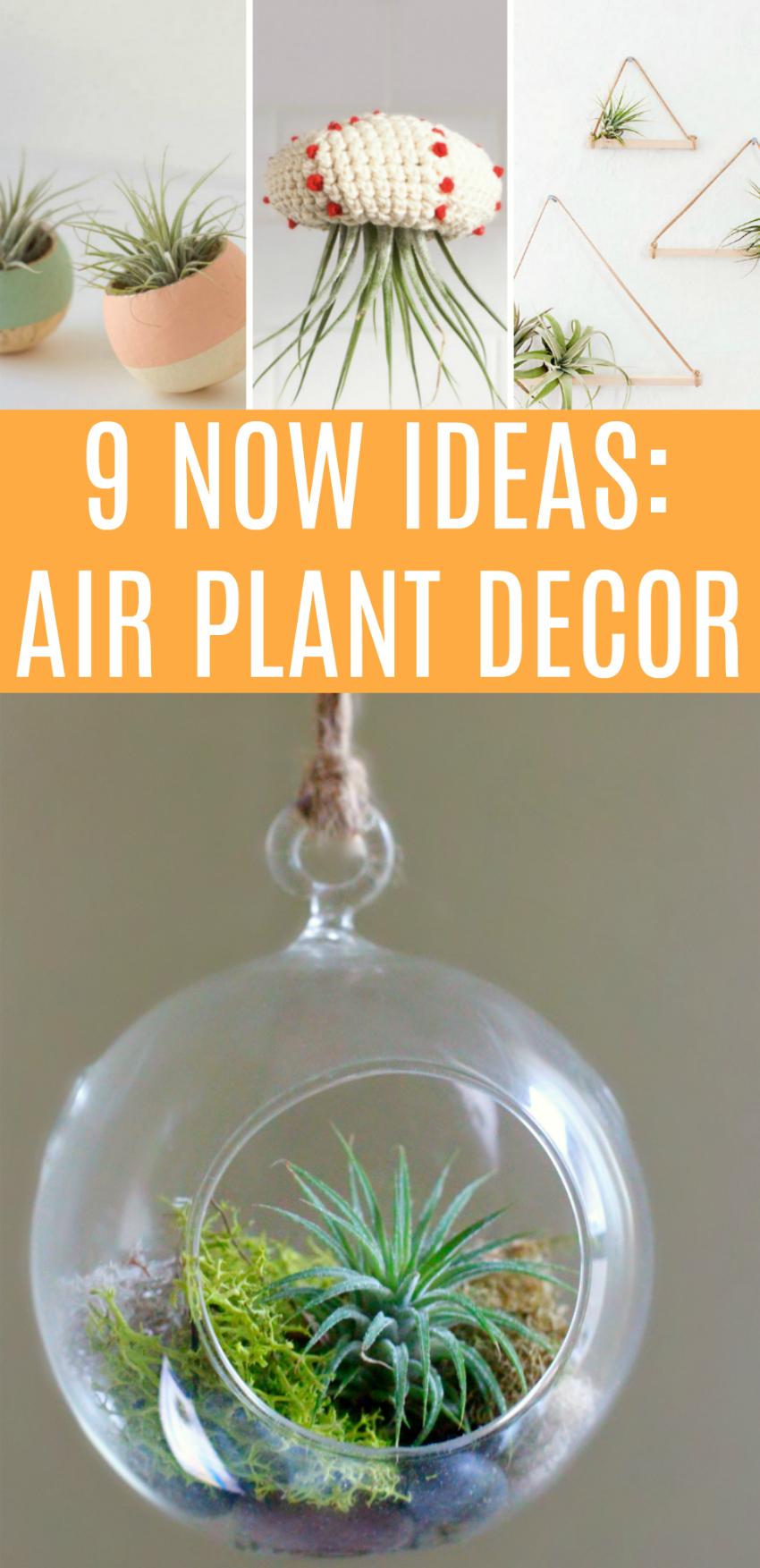 9 Now Ideas for Air Plant Decor