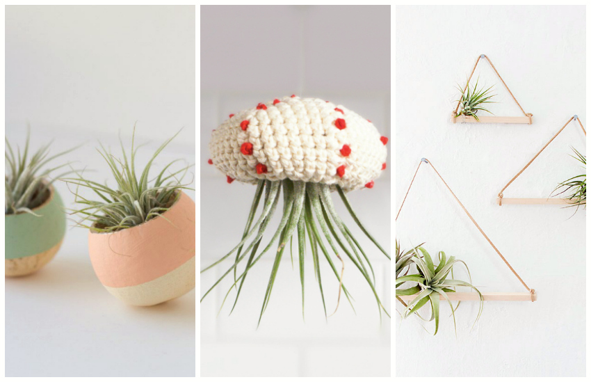 9 Now Ideas Decorate With Air Plants