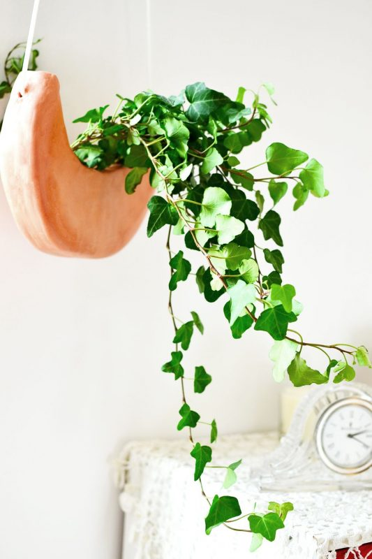 DIY Crescent Moon Hanging Planter