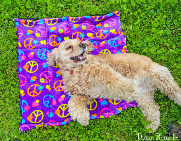 DIY-Dog-Summer-Cooling-Mat-Tutorial-with-a-Happy-Dog