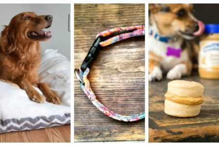 DIY Toys & Treats for the Family Dog