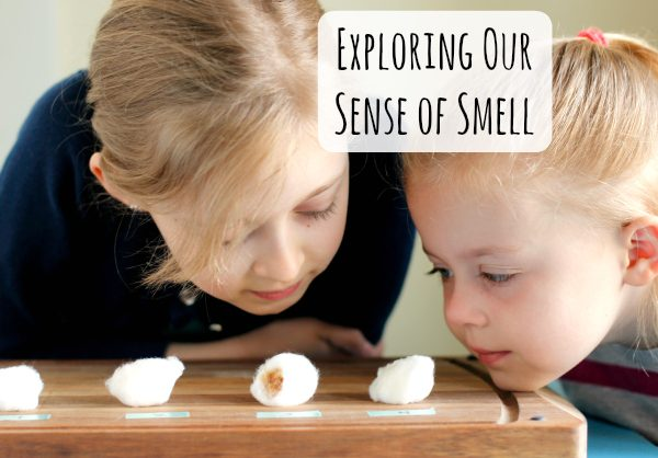 Exploring Our 5 Senses Smell Tests with Kids