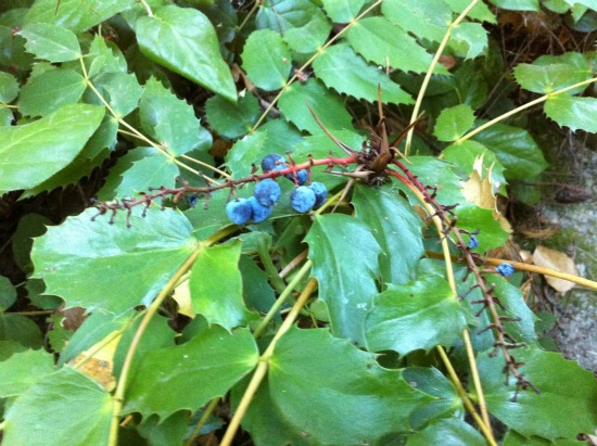 Finding berries on a hike