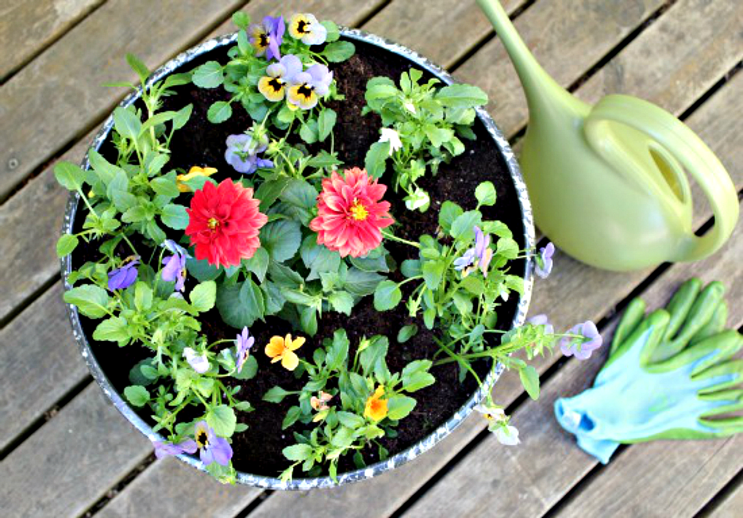 9 NOW Ideas: Gardening Activities for Kids