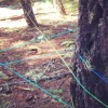 Giant Yarn Spider Web in the Woods