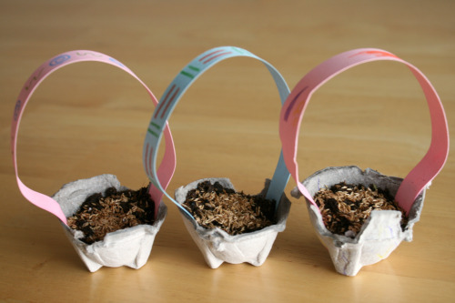 Growing Easter Grass in Recycled Egg Carton Containers