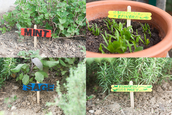 Plant Markers from Popsicle Craft Sticks