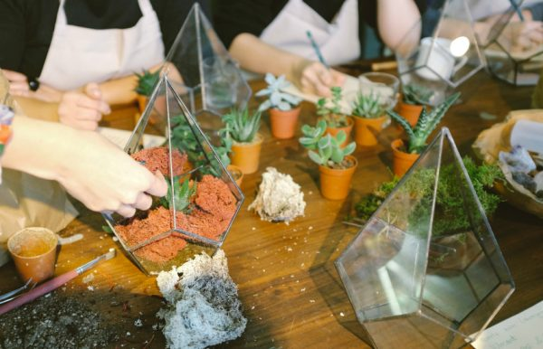 Make Your Own Terrarium Display