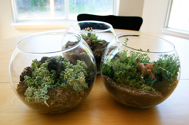 Make a Kid-Friendly Terrarium