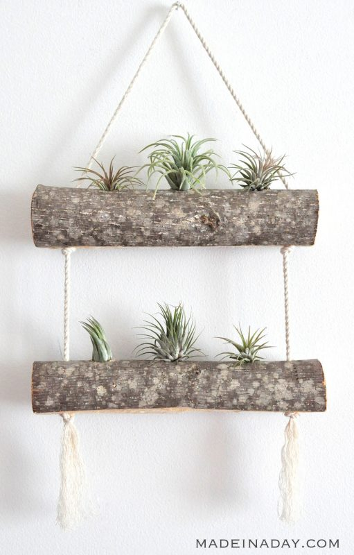 DIY Birch Air Plant Hanger: