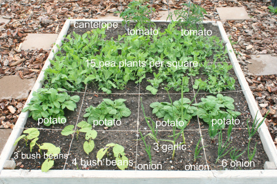 Square Foot Garden Check Up Make and Takes