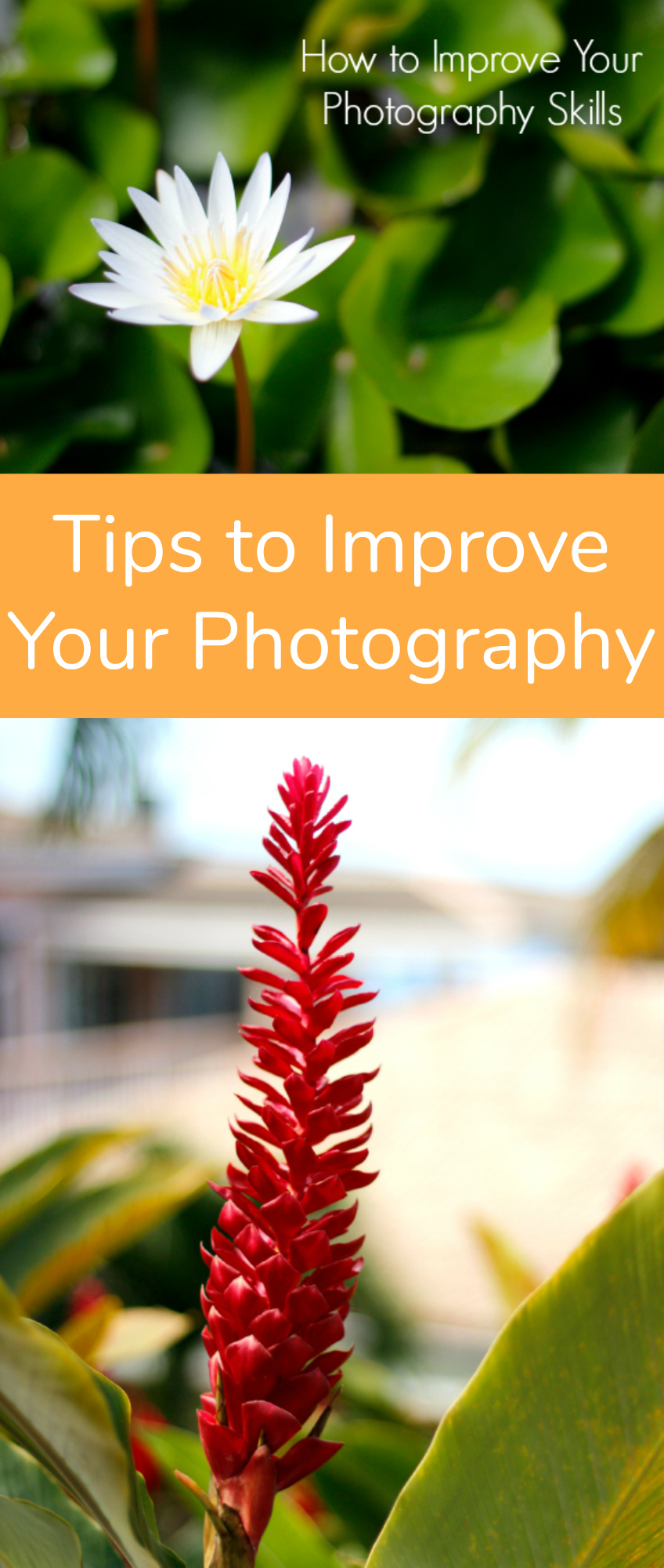 Tips to Improve Your Photography