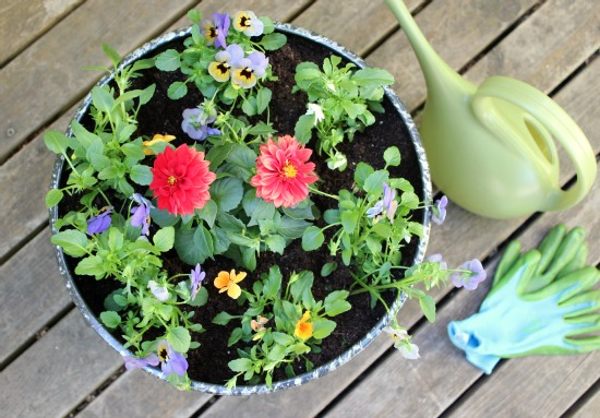 Watering Cans for Gardening