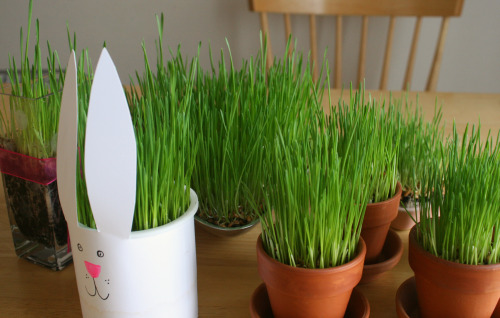 Growing Wheatgrass In Springtime Containers Make And Takes