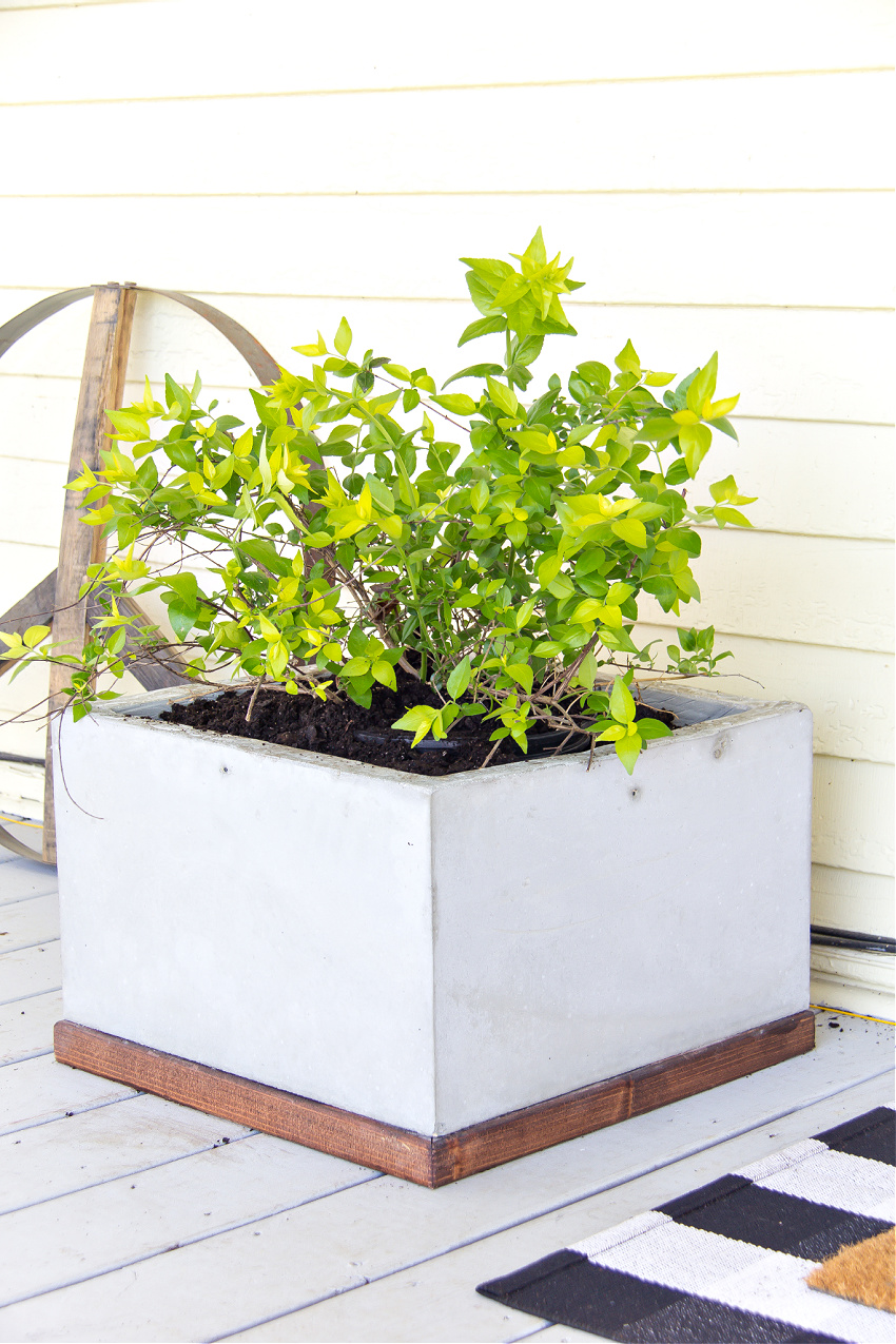 a concrete planter with a wood base and a green plant inside