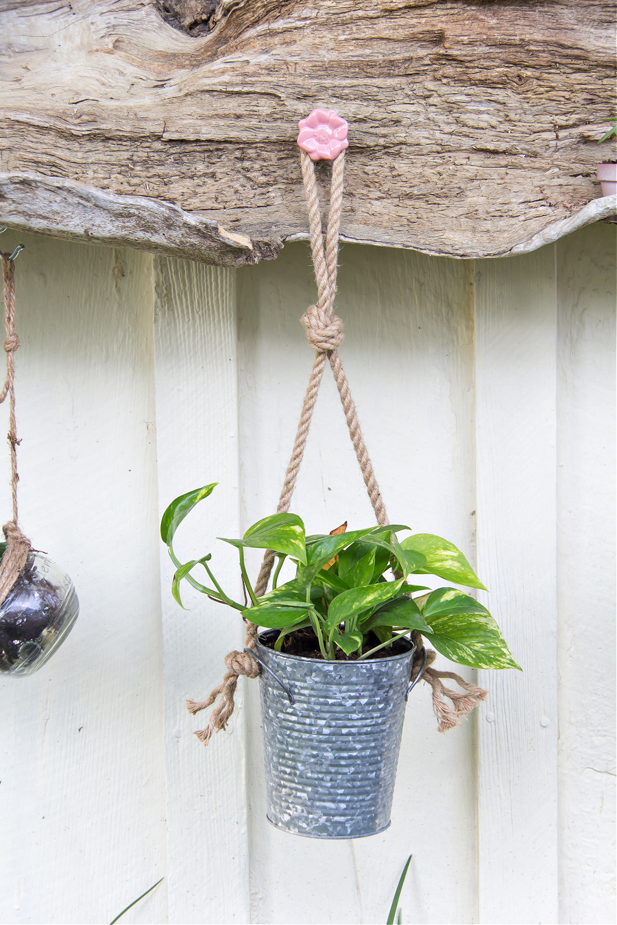 a drawer pull screwed onto driftwood to hang plants