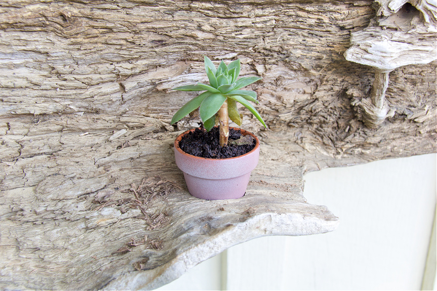 terracotta succulent planter in a piece of driftwood