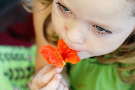 cate nasturtium flower tasting