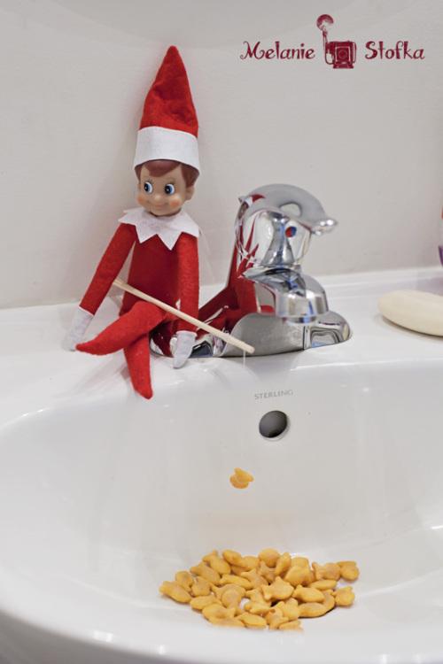Elf Loves Goldfish