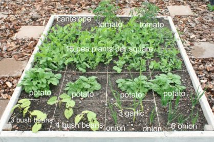 Square Foot Gardening Update
