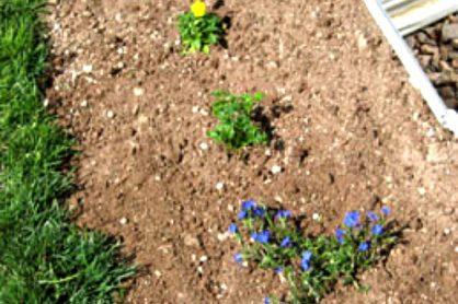 Plant a Rainbow Flower Garden