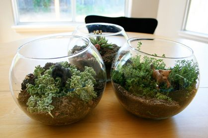 Make a Kid-Friendly Terrarium
