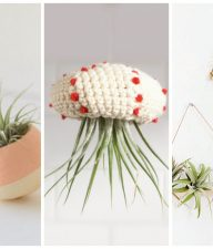 9 Ways to Decorate with Air Plants