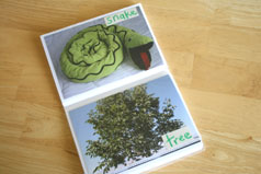 green-color-book