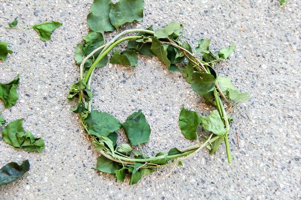 how to make a flower crown out of vines
