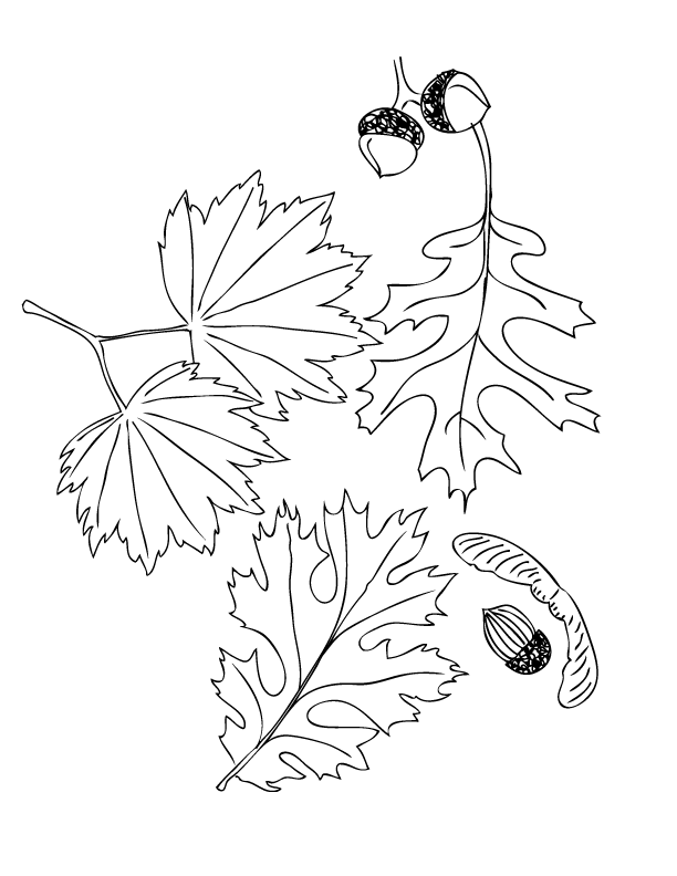 Fallen Leaves Coloring Page