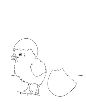 Baby Easter Chick Coloring Page