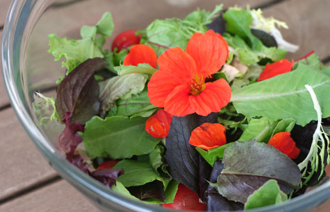 nasturtiums in salad
