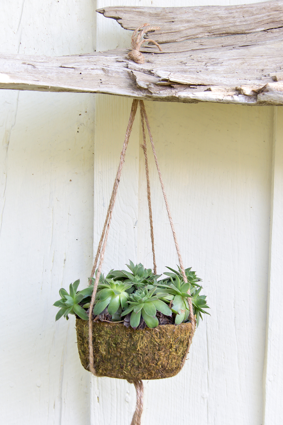 plant hanger made with hemp cord and knots hanging from driftwood