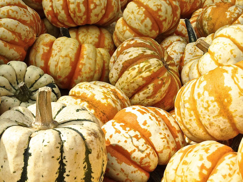 Buying Seasonal Winter Produce Squash